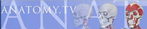 anatomy_tv